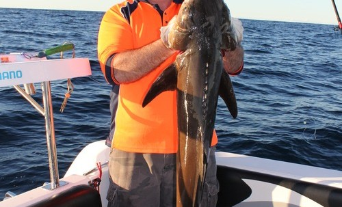Brad_with_a_thumper_cobia_take.jpg.scaled.500